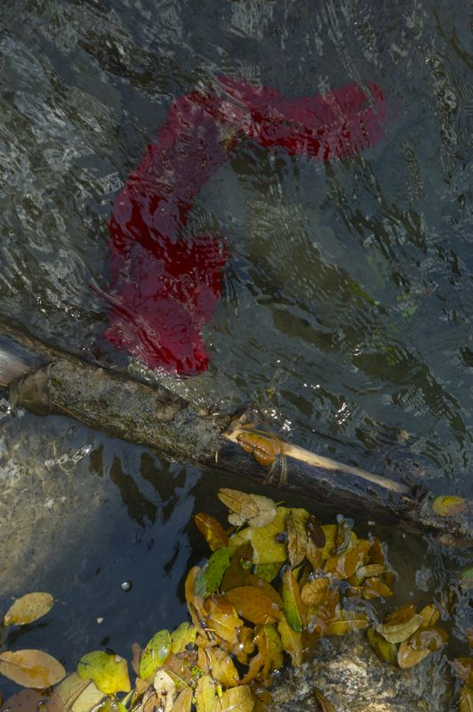 Prayer flag in the river with leaves
